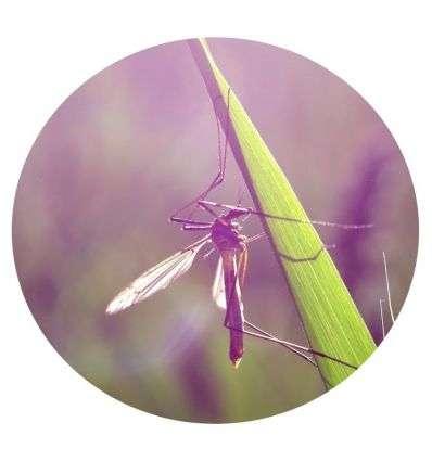 Olejek przeciwko komarom - 25ml - Maroko Produkt