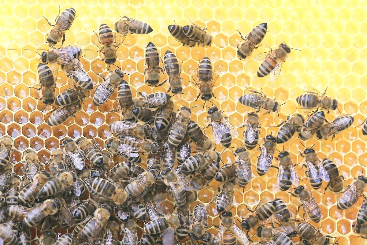 Produkty pszczele na wagę zdrowia