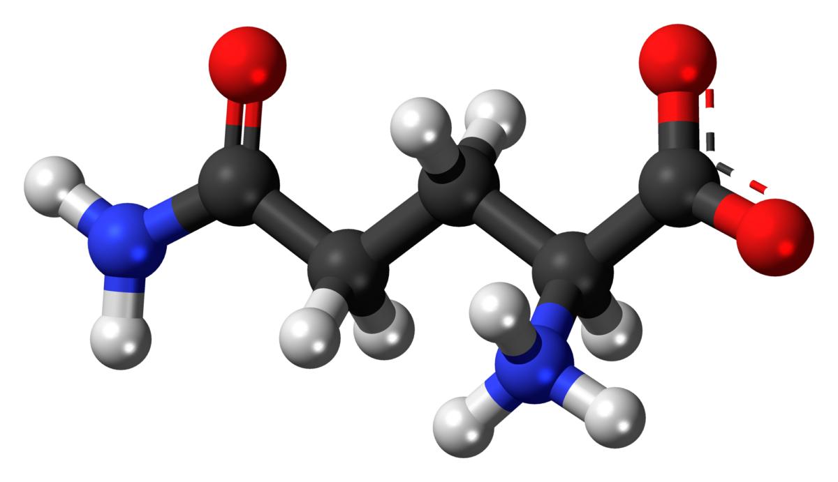 Aminokwasy- jak ważne są dla funkcjonowania naszego organizmu?