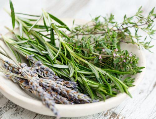 Leki ziołowe i ich zastosowanie